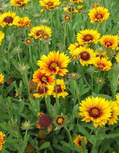 Flores de la Masía